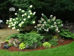 landscaping hydrangeas with evergreens   Limelight Hydrangea Tree ...