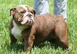 Rare Bulldogs Masters Of Color Official Rare Color Chart