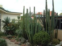 Small Picture 48 best Cactus garden images on Pinterest Cacti garden Cactus