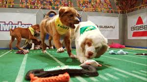 puppy bowl 2015 falcor. Plain Bowl Two Touchdowns In Minutes  Puppy Bowl XI For 2015 Falcor 1
