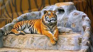Gaziantep Hayvanat Bahçesi Nerede? Gaziantep Hayvanat Bahçesi Hayvanları,  Giriş Ücreti, Çalışma Saatleri Ve İletişim Bilgileri (2020)