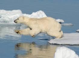 о белом медведе для детей Доклад о белом медведе для детей