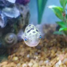 petco animals fish. Plain Petco Photo Of Petco  Warwick RI United States This Is Tomatoa Throughout Animals Fish