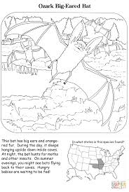Small Picture Ozark Big eared Bat coloring page Free Printable Coloring Pages