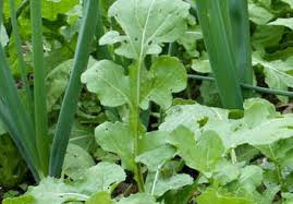 Arugula Companion Planting Chart Companion Planting Fact Or Fiction Gardening Austin