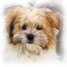 Hund Verstorben Wann Kommt Die Seele Aus Dem Körper Zbuzz