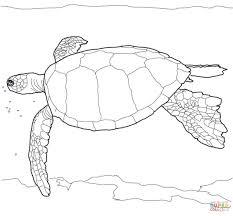 Hawaiian Green Sea Turtle Coloring Page Cute Pages 7 Futuramame
