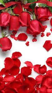 Red Roses Wallpaper Iphone