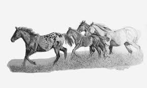 wild horse drawings in pencil.  Wild Wild Horse Herd By TheHorseTalker  For Drawings In Pencil D