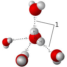 what atoms can form hydrogen bonds hydrogen bond wikipedia