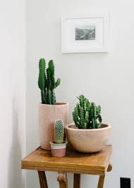 Accessories: Pretty Cactus Pots With Desert Ideas - Indoor Garden