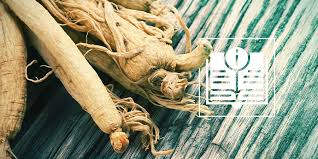 Ginseng Everything You Need To Know Zamnesia