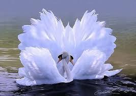 Лебеди— самые крупные из водоплавающих птиц. | VilingStore