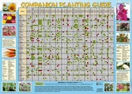 Vegetable Companion Planting Charts Buy Companion Planting Chart