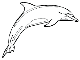 Coloring Pages Online Printable For Girls Pdf Disney Cute Dolphin