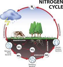 Nitrogen Cycle Steps