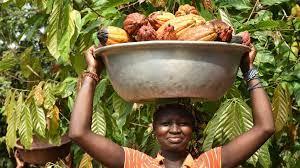الزراعة العضوية سلاح ريفيات في ساحل العاج للخروج من الفقر