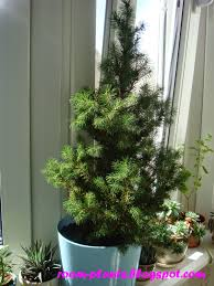 Interior Designs Doors Indoor Christmas Decorations With Lights Plants The  Soul Of Your Flat A Spruce ...