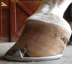 club foot in horses