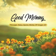 100 Best Good Morning Messages Status Quotes Wishes