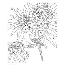 Small Picture 10 Best Cardinal Coloring Pages For Your Little One