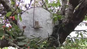 How To Keep Birds Away From Your Fruit Trees Easy Fun And Cheap How To Protect Your Fruit Trees From Squirrels