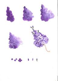 lilacs worksheet by linda lover i really could have used this in my lilac painting