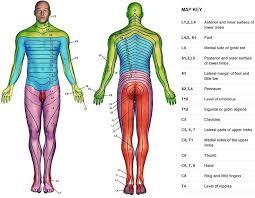 Dermatomal Pattern Classy Herniated Nucleus Pulposus SMARTY PANCE