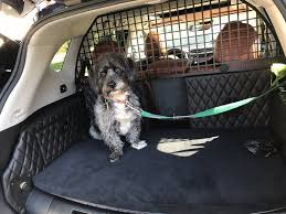 i m a secret dog lover marco our new hound is also a terrific traveler he normally likes to sit up front on the floorboards of the passenger