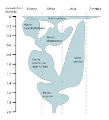 Human Evolution Chart Species File Human Evolution Chart It Svg Wikimedia Commons