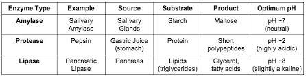 6 1 Digestion Bioninja
