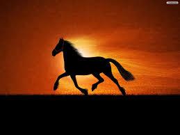 Résultats de recherche d'images pour «black horse»
