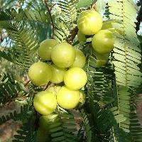 Green Orchid Nursery  Fruit Trees For SaleHybrid Fruit Trees For Sale