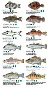 California Rockfish Chart Fish Identification Maryland Fishing Regulations 2019