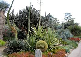 Small Picture 36 best Desert Landscaping images on Pinterest Landscaping