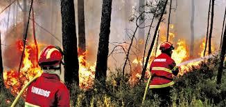 Resultado de imagem para incendios florestais