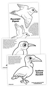 Small Picture Coloring Pages Passenger Pigeon Hornbill Bee eater