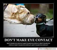 Funny Dog Quotes Unique Cute Funny Quotes Funny Dog Quotes Pictures By Nuts And Funny