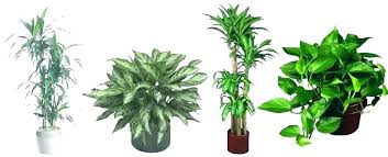 tall house plants bird of paradise tall artificial house plants uk