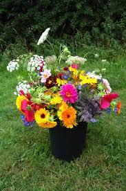 best cut perennial flowers cutting garden top 50 cut flowers