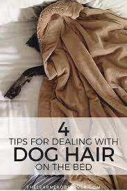 4 ways to help keep pet hair off the bed for good thelearnerobserver