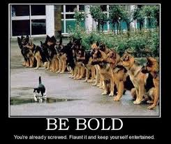 Be Bold! Meow! #cats funny meme | Aplastic Anemia | Pinterest | Be ... via Relatably.com