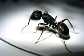 ants in kitchen cabinets natural remedy ants killing ants in kitchen cabinets