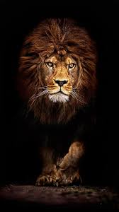 Lion Phone Wallpapers - Top Free Lion ...