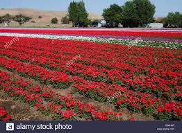 flower farm in gilroy