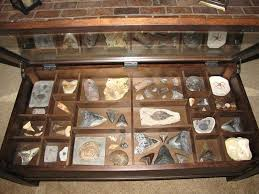 coffee table display case coffee table display case member collections the fossil forum alluring display coffee coffee table display case