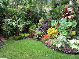 Small Picture Tropical garden design images