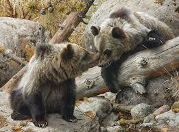 carl brenders alaska grizzly bears