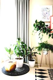 cool office plants. Crazy Cool House Plants Trending In Brit Co Office