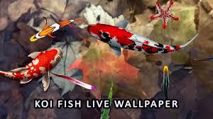 Koi Fish Wallpaper 3D - Water Fish ...